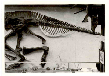 Lambeosaur1